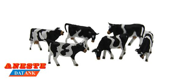 4009 Black cows
